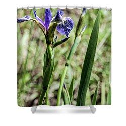 Shower Curtain featuring the photograph Wild Maine Iris by Daniel Hebard