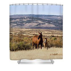 Wild Mare With Young Foal In Sand Wash Basin Shower Curtain