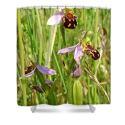 Wild Meadow Bee Orchids Shower Curtain