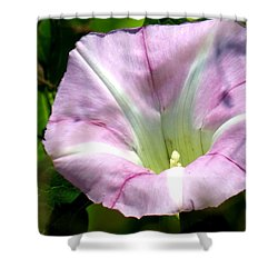 Wild Morning Glory Shower Curtain