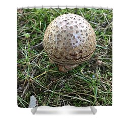 Shower Curtain featuring the photograph Wild Mushroom 3 by Dorothy Maier