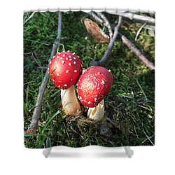 Shower Curtain featuring the photograph Wild Mushrooms 2 by Dorothy Maier