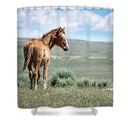 Wild Mustang Colt Of Sand Wash Basin Shower Curtain