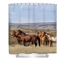 Wild Mustang Family Band In Sand Wash Basin Shower Curtain