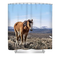 Wild Mustang Filly Of Sand Wash Basin Shower Curtain