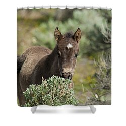 Wild Mustang Foal Shower Curtain