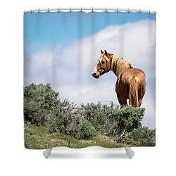 Wild Mustang Stallion Of Sand Wash Basin Shower Curtain