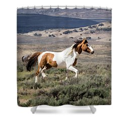 Wild Mustang Stallion On The Move In Sand Wash Basin Shower Curtain