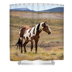 Wild Mustang Stallion Picasso Of Sand Wash Basin Shower Curtain