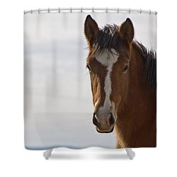 Wild Mustang Yearling Shower Curtain