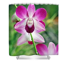 Wild Orchids Shower Curtain by Michael Peychich