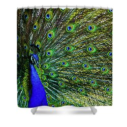 Wild Peacock Shower Curtain