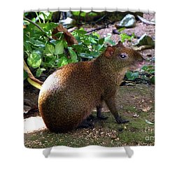 Shower Curtain featuring the photograph Wild Rodent  by Francesca Mackenney