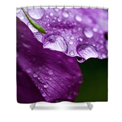 Shower Curtain featuring the photograph Wild Rose Droplet by Darcy Michaelchuk