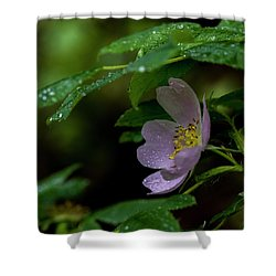 Shower Curtain featuring the photograph Wild Rose With Shelter by Darcy Michaelchuk