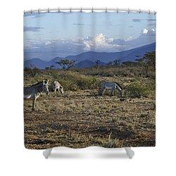Wild Samburu Shower Curtain by Michele Burgess
