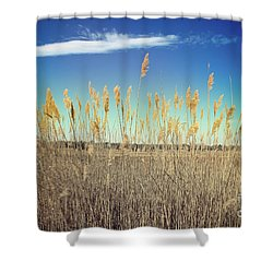 Shower Curtain featuring the photograph Wild Sea Oats by Colleen Kammerer