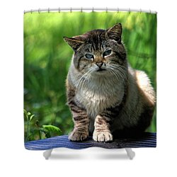 Shower Curtain featuring the photograph Wild Siamese by Chriss Pagani