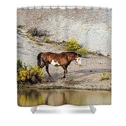 Wild Stallion Of Sand Wash Basin, Raindance Shower Curtain