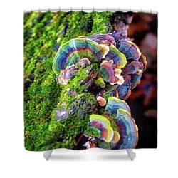 Wild Striped Mushroom Growing On Tree - Paradise Springs - Kettle Moraine State Forest Shower Curtain by Jennifer Rondinelli Reilly - Fine Art Photography