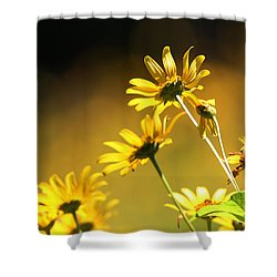Wild Sunflowers Stony Brook New York Shower Curtain by Bob Savage
