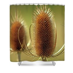 Wild Teasel Shower Curtain by Bruce Patrick Smith