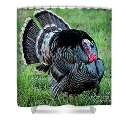 Wild Turkey - Capitol Reef National Park - Utah Shower Curtain by Gary Whitton