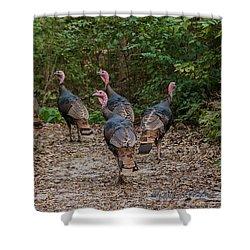Wild Turkey Flock Shower Curtain