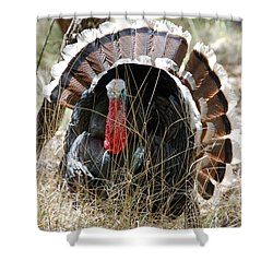 Shower Curtain featuring the photograph Wild Turkey by Frank Stallone