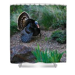 Wild Turkey Shower Curtain by Mark Barclay