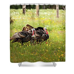 Wild Turkey's Dance Shower Curtain