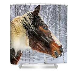 Wild Winter Storm Shower Curtain