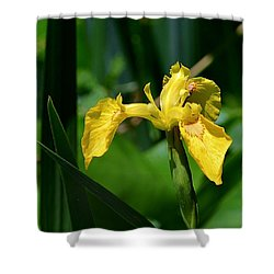 Wild Yellow Iris Shower Curtain