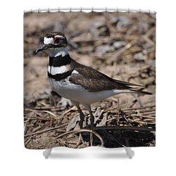 Wildbird Killdeer Mother Shower Curtain