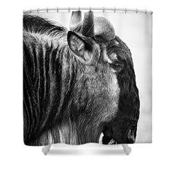 Wildebeest Shower Curtain by Adam Romanowicz