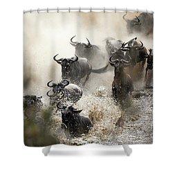 Wildebeest Herd Crossing The Mara River Shower Curtain