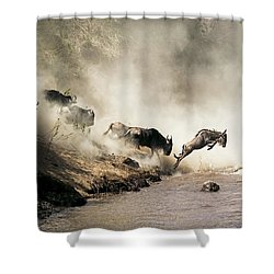 Wildebeest Leaping In Mid-air Over Mara River Shower Curtain