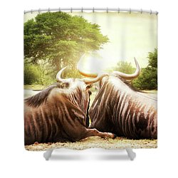 Wildebeest Looking Out Over African Sunset Shower Curtain