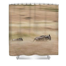Wildebeest Running Through Grasslands - Panning Blur Shower Curtain