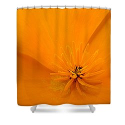 Wildflower Art Poppy Flower 6 Poppies Artwork Prints Cards Shower Curtain by Baslee Troutman