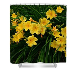 Shower Curtain featuring the photograph Wildflower Bouquet by Linda Edgecomb