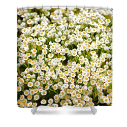 Shower Curtain featuring the photograph Wildflowers by Holly Kempe