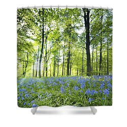 Wildflowers In A Forest Of Trees Shower Curtain by John Short