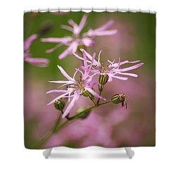 Wildflowers - Ragged Robin Shower Curtain by Christina Rollo