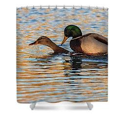 Wildlife Love Ducks  Shower Curtain