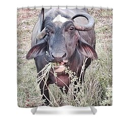 Wilds Of Buffalo Shower Curtain