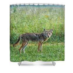 Shower Curtain featuring the photograph Wiley by Jessica Brawley