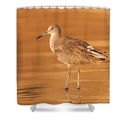 Willet Shower Curtain by Clarence Holmes
