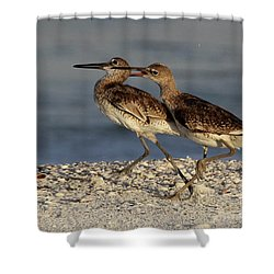 Willet Fight Shower Curtain