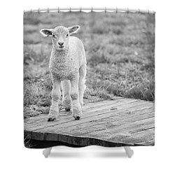 Williamsburg Lamb Shower Curtain